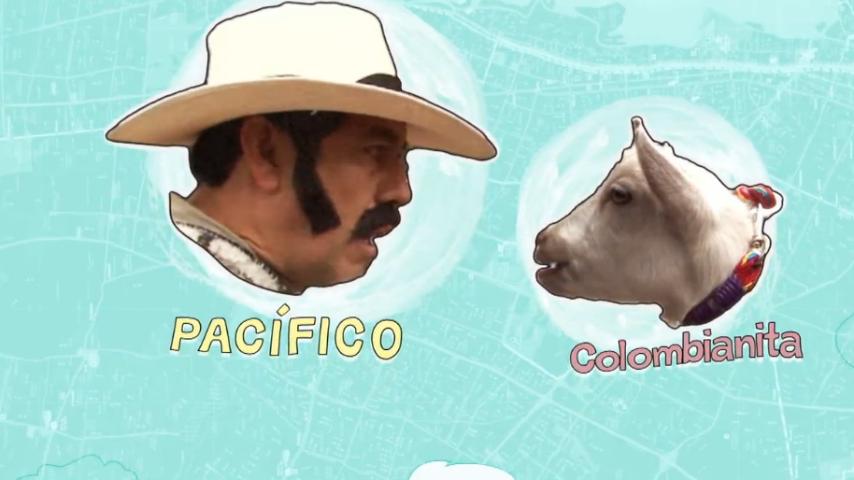 Pacifico y Colombianita