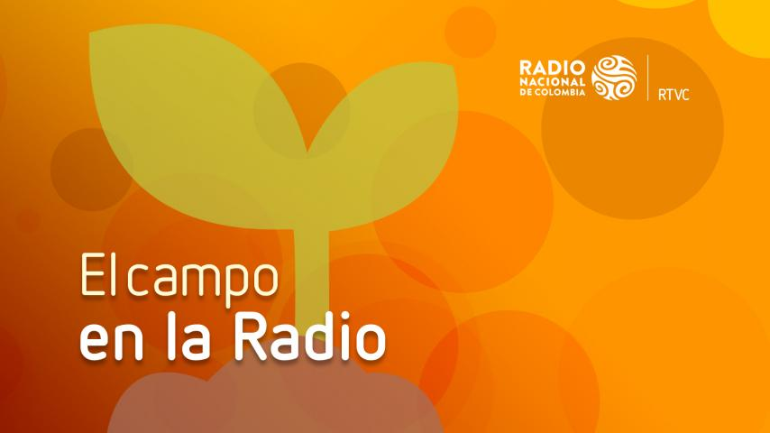El Campo en la Radio